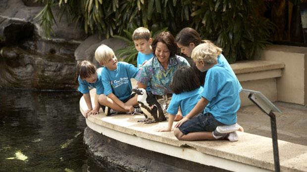 hilton-hawaiian-village-kids-club-penguin