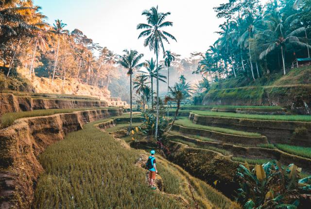 Bali Large